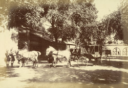 Stables [Rampur] 33